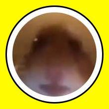 Hamster Facetime Snap Lens Finder